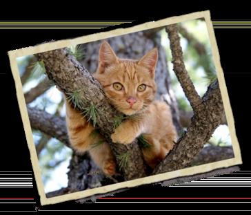 Homeopatía para animales a domicilio