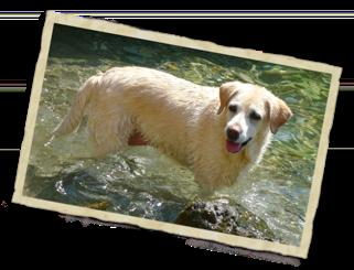 Homeopatía para perros a domicilio