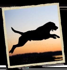 Fisioterapia canina en Madrid a domicilio